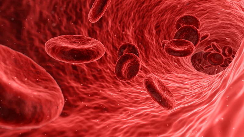blood-cells-16-9